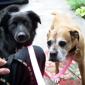 Pet Hospital Of New Bern - New Bern, NC. Tucker and Ms. Ema