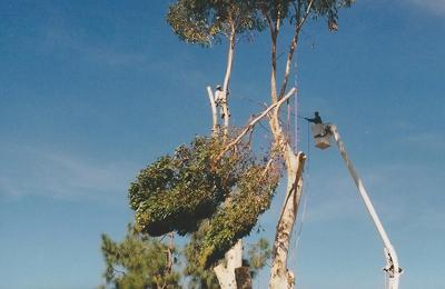 Ken Bojok Tree Service