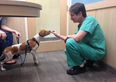 West Kendall Animal Hospital - Miami, FL. Dr. Davidson knows how to make friends with a nervous new patient.