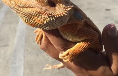 Melrose La Brea Animal Hospital - Los Angeles, CA