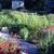 Green Thumbs Gardening