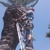 Johnny's palm & tree svc