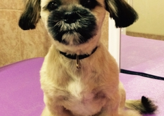Loving & Gentle Small Dog Grooming - Kingman, AZ