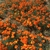 Antelope Valley California Poppy Reserve State Natural Reserve