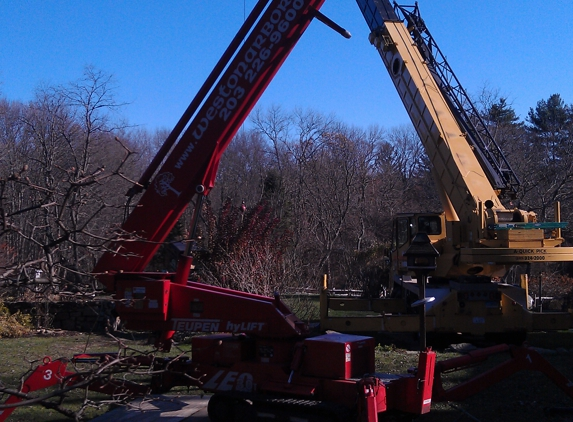 Weston Arborists - Weston, CT