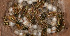 Bug Doctor Pest Control - Greenbank, WA