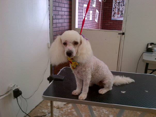 Doggy wash pet grooming 9834 dyer st el paso tx 79924 yp solutioingenieria Gallery