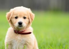 EZ Pet Care
