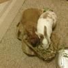 Paws Animal Hospital