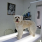 Pawsitively Groomed Pet Salon - Burlingame, CA