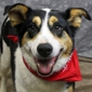 Kentucky Humane Society adoptions at Clarksville Feeders Supply - Clarksville, IN