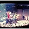 Fin-Tastic Fish & Pets