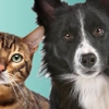 Animal Eye Specialty Clinic / Animal Allergy Skin & Ear Specialists