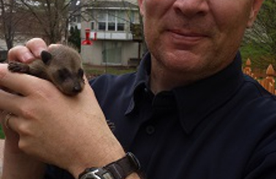Aces Wildlife Removal - Imperial, MO. baby raccoon removed from attic
