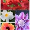 Paradise Plantscapes Inc