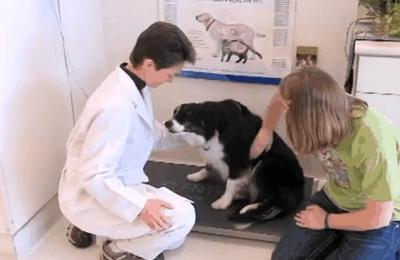 Tender Loving Care Animal Hospital, P.C. - Longmont, CO