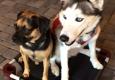 Sit Means Sit Dog Training - Sarasota, FL