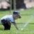 American Sprinkler Repair