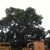 Mortensen Tree Service Inc