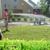 Prestige Landscaping & Lawn Maintenance