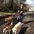 Good Shepherd Pet Sitters