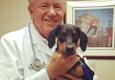 Downtown Pet Hospital - Orlando, FL. Dr. Califf