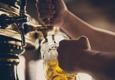 Gordon Biersch Brewery Restaurant - Annapolis, MD