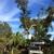 Royal Tree Service & Landscaping LLC