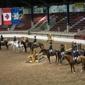 City View Equestrian, LLC - Bloomfield, NY