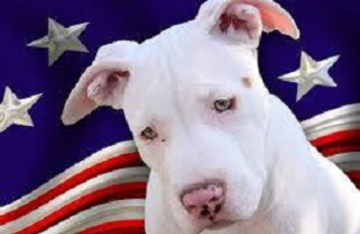 All American Pets, Inc. - Baltimore, MD