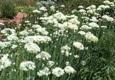 Huntington Library Art Collections and Botanical Gardens - San Marino, CA. Amazing gardens.
