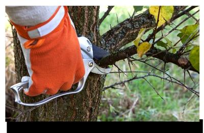 Tony Gomez Tree Service & Landscape Maintenance INC. - El Cajon, CA