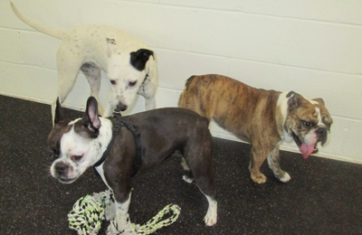 Woof Pack Dog Daycare - Minneapolis, MN