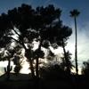 Palm Kings Tree service