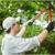 Markovski Landscaping & Tree Service