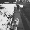 Four Feet's Sake Dog Walking