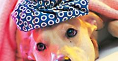 Miami Pet Emergency - Miami, FL