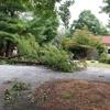 NatureScape Tree Service, LLC