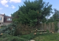 Above & Beyond Tree and Shrubbery Service - South Bend, IN. White pine pic #1 June 2017