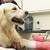 Griffith Veterinary Hospital