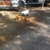 Safe Animal Shelter of Orange Park Inc