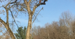 All Seasons Tree Care, Inc. - Bethlehem, PA. Trimming branches off the live tree.