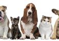 Affordable Pet Care Northwest - San Antonio, TX
