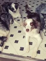 Hating to leave Adams Pet Spa while Dad is away at seminars!