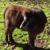 Kessinger, Charles, DVM Adobe Equine Veterinary Services