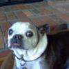 Buster Brown's Dog Bandanas