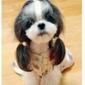 Kellie's Pet Salon Grooming, Boarding & Rescue - Sanford, FL