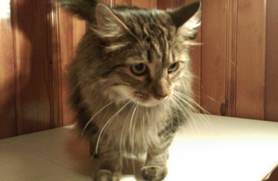 Tallahassee Cat Grooming - Tallahassee, FL
