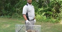 Nest Pest Control Washington DC - Washington, DC