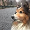 Swifto-Private Dog walking
